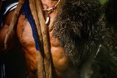 stock photo of werewolf hunter  - Close up torso of a strong man with a skin on his shoulder - JPG
