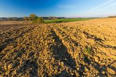 picture of plowed field  - Beautiful plowed field autumnal landscape photographed in nice morning light under blue sky. Tranquil rural scene of plowed polish fields photographed with full frame camera.