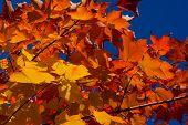 ������, ������: Fall Colors