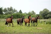 image of wild horse running  - Herd of horses running free at pasture in summer - JPG