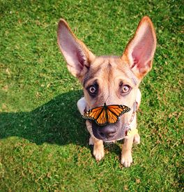 picture of spayed  -  a cute dog in the grass at a park during summer with a butterfly on his or her nose  - JPG
