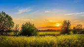 image of rape-field  - Sunset and idyllic country landscape with field of yellow rape - JPG