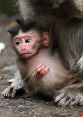 picture of mother baby nature  - two monkeys one baby and one grown up - JPG