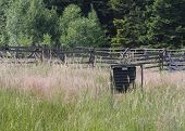 picture of trap  - Pheromone trap for bark beetle in grass on meadow near forest  - JPG
