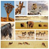 african safari collage