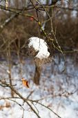 Winter Background Snow-covered Bushes In Winter Forest. Branch With Loose Snow In Focus On Blurred F poster