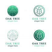 Set Of Simple Line Logos, Round Circle Oak Tree Leaf Symbol Logo Emblem, Ecology Organic Concept, Is poster
