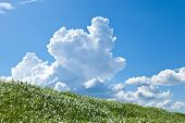 picture of thunderhead  - This is a picture of grass and thunderhead - JPG