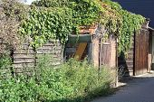 Shed Overgrown With Ivy