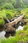 pic of upstream  - An old tree trunk lays in a small river with a bridge upstream