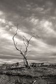 Dramatic Image Of Barren Tree.