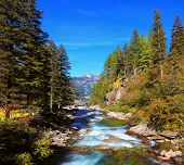 picture of coniferous forest  - Rapid mountain stream of coniferous forests - JPG