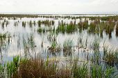 picture of boggy  - Swampy area with grass and sedge  - JPG