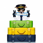 stock photo of boarding pass  - dog with boarding pass on top of luggage - JPG