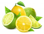 image of lime  - Vector illustration - JPG