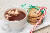 picture of hot-chocolate  - hot chocolate with marshmallows and home made chocolate chip cookies on a plate with a striped candy cane - JPG