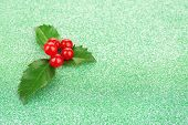 image of aquifolium  - European Holly  - JPG