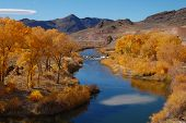 stock photo of cottonwood  - yellow cottonwood trees along a river with mountains in the background in nevada - JPG
