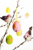 pic of pussy  - Easter colored eggs and birds on  pussy willow branches - JPG