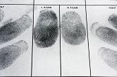 stock photo of fingerprint  - Real human fingerprint on police fingerprint card - JPG