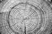 picture of cutting trees  - Tree rings saw cut tree trunk background - JPG