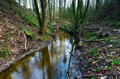 foto of wetland  - Forest wetlands - JPG