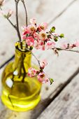 stock photo of vase flowers  - Spring flowers - JPG