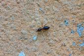 stock photo of termite  - close up Termites eating the house on wall - JPG
