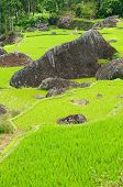 stock photo of nasi  - Green rice terraces in Tana Toraja South Sulawesi Indonesia - JPG