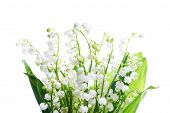 image of white lily  - White flowers lilies of the valley isolated on white background - JPG
