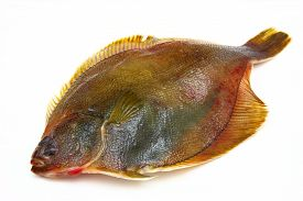 picture of flounder  - The Fresh fishes flounder on white background - JPG