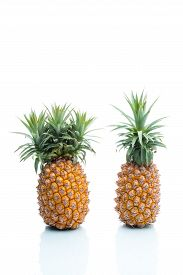 pic of modification  - Genetic Modification pineapple fruit modification strange surreal invention - JPG