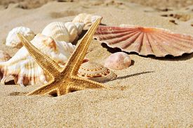 foto of conch  - closeup of a starfish and some seashells and conches on the sand of a beach - JPG