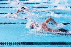 stock photo of swim meet  - Freestyle swimmers racing - JPG