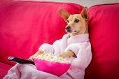 Постер, плакат: Dog Watching Tv On The Couch