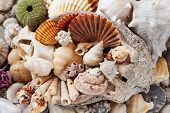 Sea Shells Background, Assorted Colorful Shells Deco poster