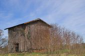 image of tobacco barn  - Agriculture History  - JPG