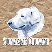 Slovakian Chuvach. Slovak Cuvac Dog Breed With Long Fur Digital Art. Watercolor Portrait Close Up Of poster
