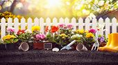 Garden Flowers, Plants and Tools on a Sunny Background. Spring Gardening Works Concept poster