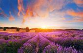 Lavender Field, France. Blooming Lavender At Sunset,france. poster