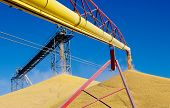 picture of auger  - Recently harvested corn pours into large piles at a grain storage facility in western Minnesota - JPG