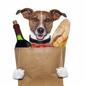 stock photo of bag-of-dog-food  - grocery bag dog wine tomatoes bread holding it - JPG