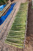 picture of tobacco barn  - Drying tobacco in tobacco field of Thailand - JPG