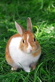 image of bunny rabbit  - Cute bunny rabbit sitting outside in green grass - JPG