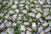 picture of interlocking  - Grungy interlocking concrete pavement with grass growing along its joint for textural background - JPG