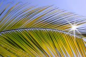picture of summer beach  - palm tree  on the beach and blue sky - JPG
