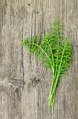 pic of horsetail  - Several harvested stalks of Horsetail curative and healthy plant ready for tea or drying
