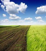 image of cultivation  - Cultivated green meadow - JPG