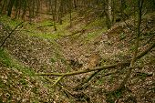 pic of fallen  - Fallen trees in a deciduous forest on a spring day - JPG