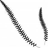 stock photo of fern  - Vector illustration of Fern silhouette - JPG